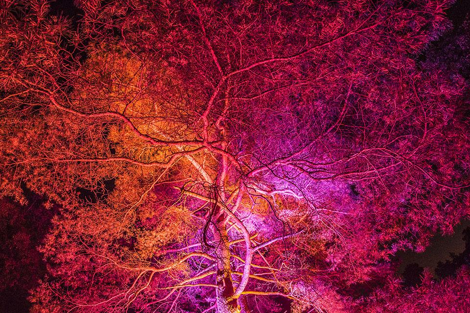 Foto HeideZauber: Blutbaum